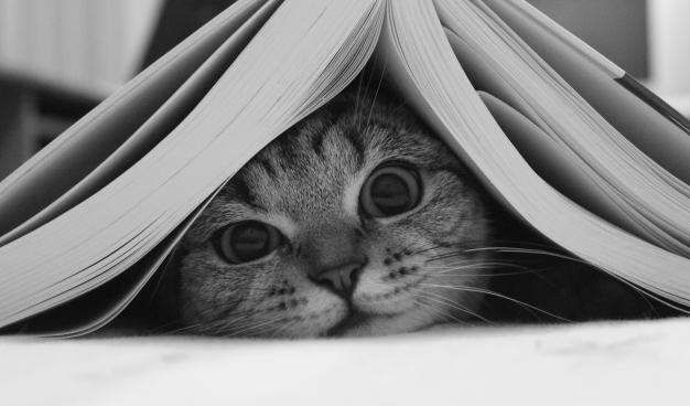cat and book shutterstock_133485035 (2)